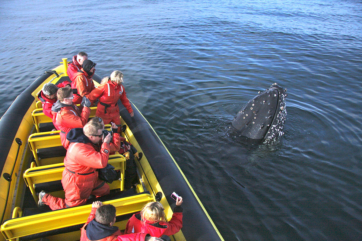 A rare and memorable moment, sometimes the whales are curious and approach us!