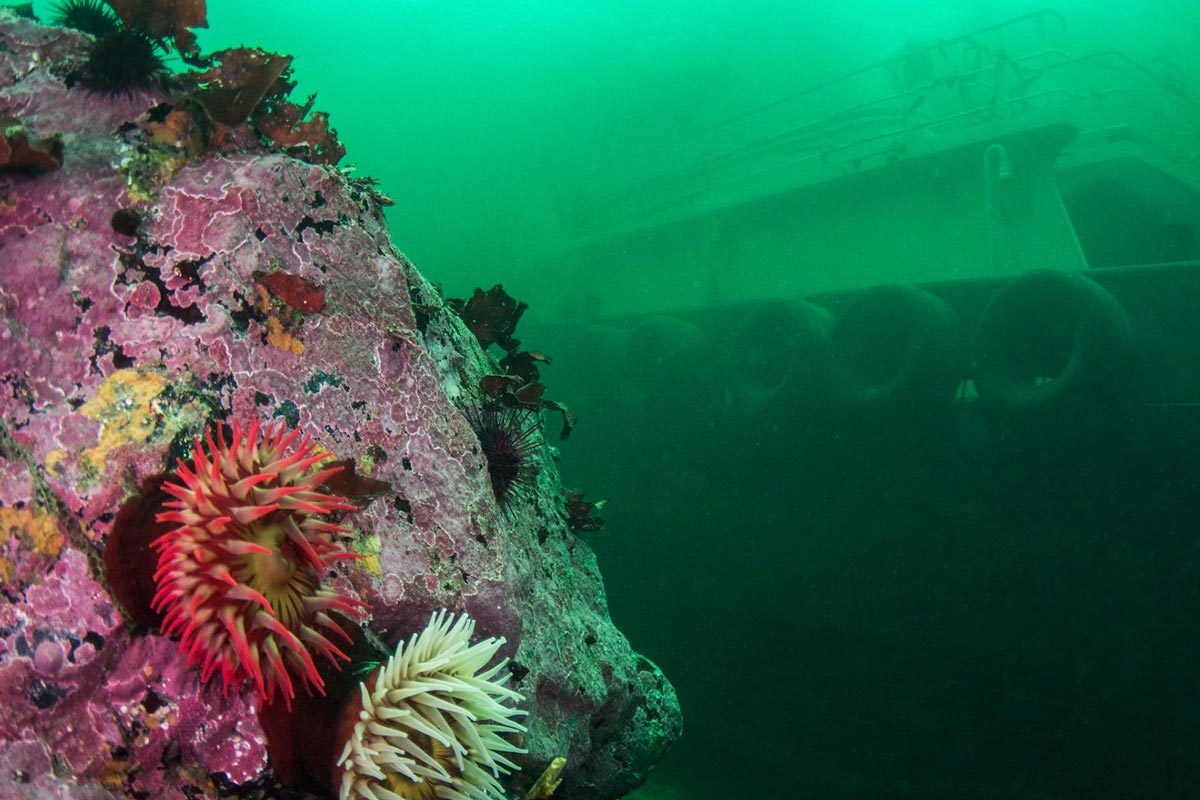 Sunk Vessel off Vancouver Island