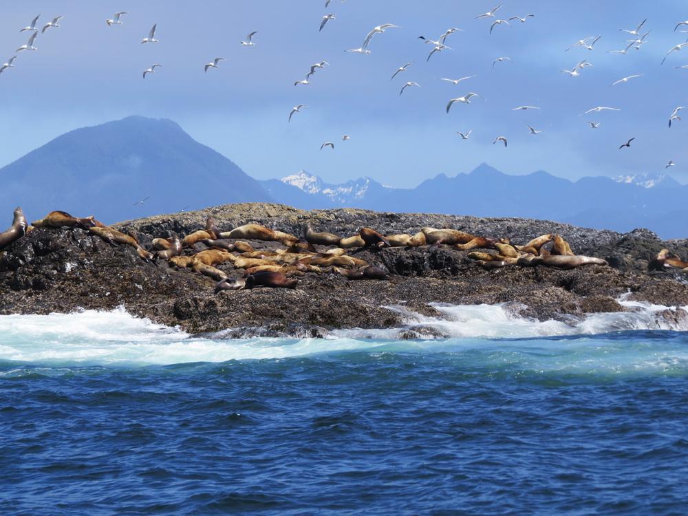 Seal Rock. Photo: Geoff Brinkhaus