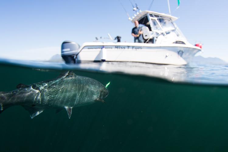 Deep sea fishing off the Tofino coast.