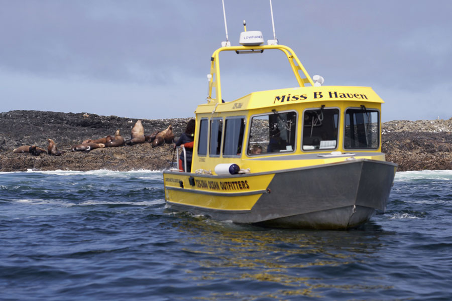 One of our covered vessel whale watching boats with guests looking at sea lions.