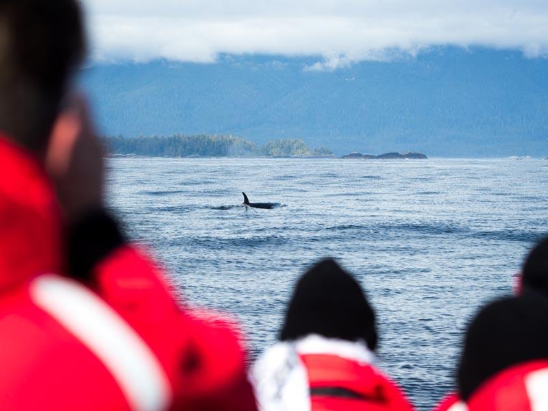zodiac-whale-watching-orca.jpg