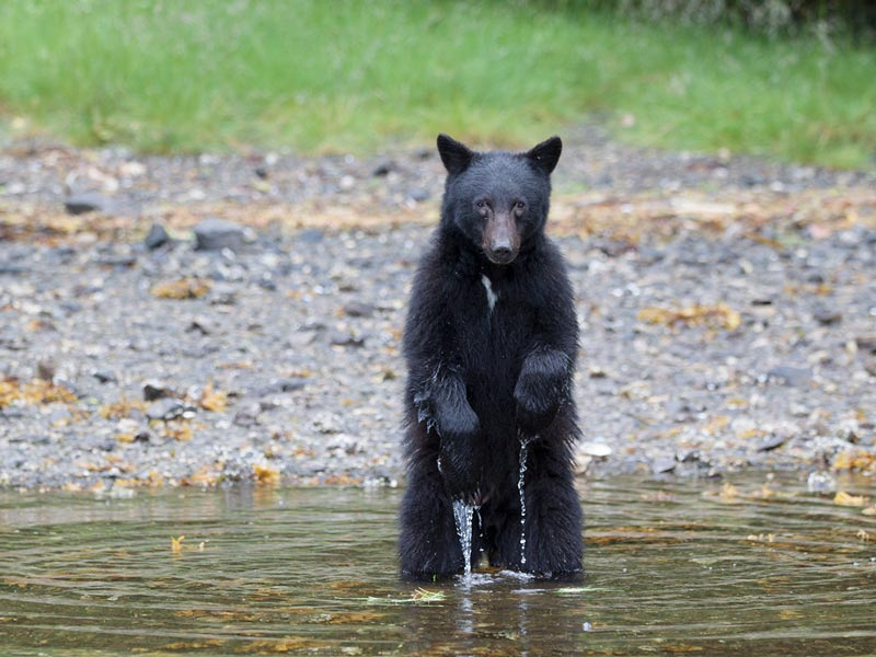 bear-watching-zodiac-boat-1.jpg