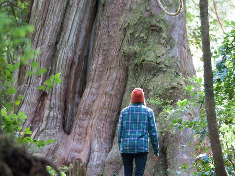 Big-Tree-Trail-Tofino-2.jpg