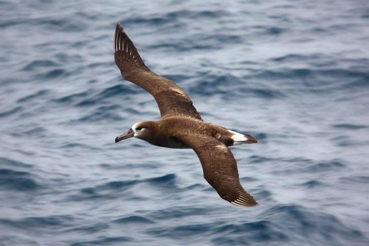 tofino-birding-image.jpg