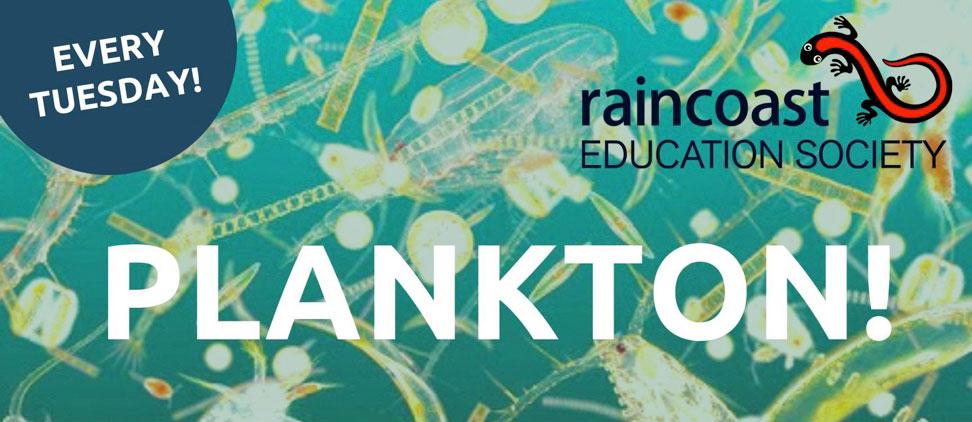 Plankton Tuesday with Raincoast Education Society in Tofino, BC
