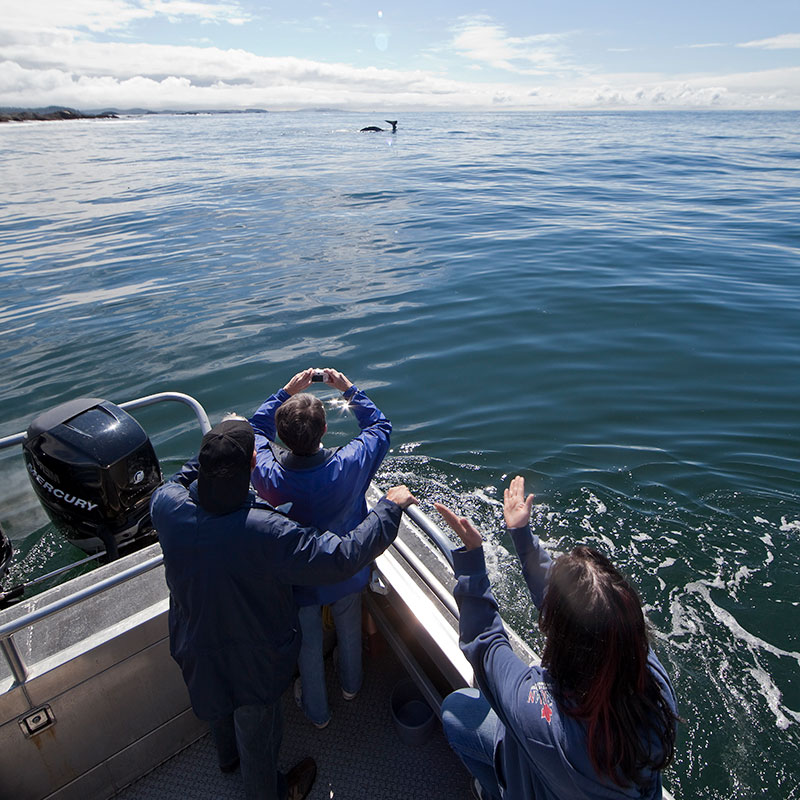 Family Whale Watching in Tofino BC