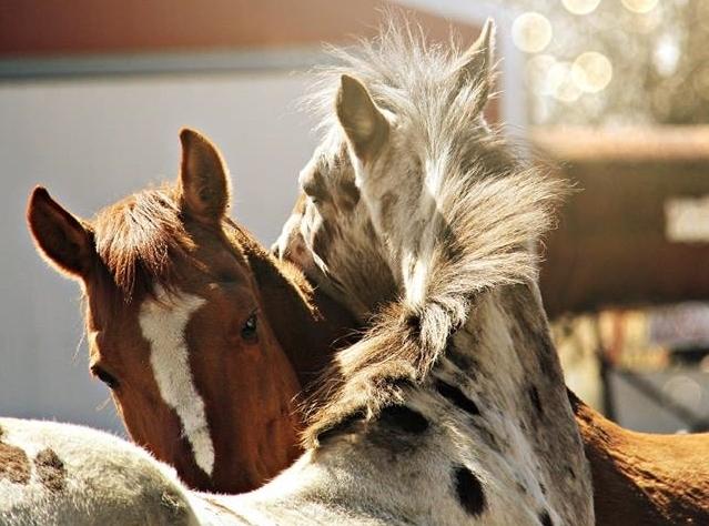 horse-kiss-10915139_775140032564236_6853886088032141894_n.jpg