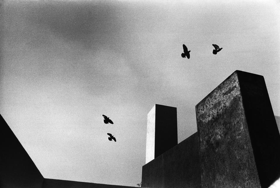 THE LIMN-LOUIS BARRAGAN-BIRDS