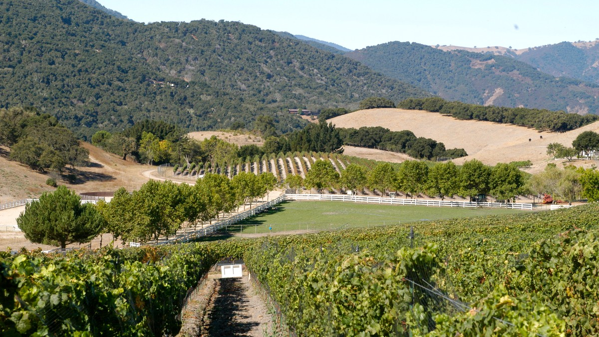 Image courtesy of Silvestri Vineyards