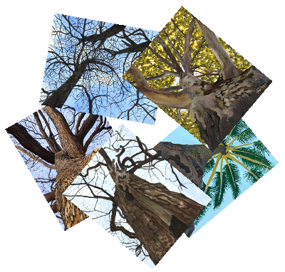 Tree variety package includes these 5 designs (10 total note cards, 2 of each design).