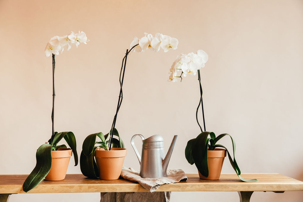 Blooming Potted Plants