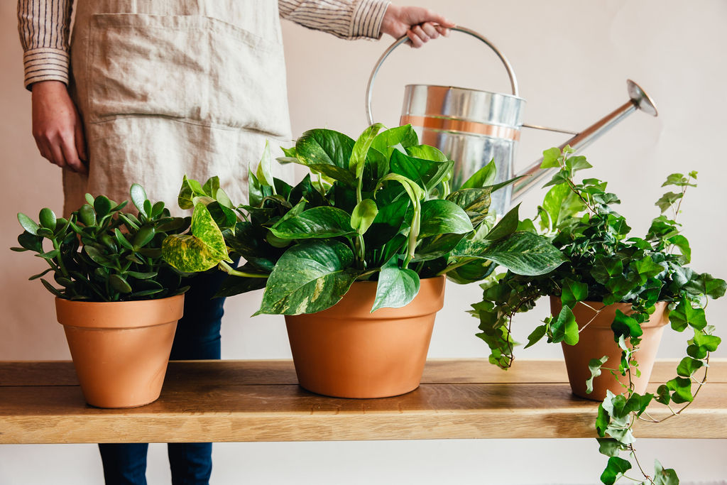 Locally Grown Potted Plants