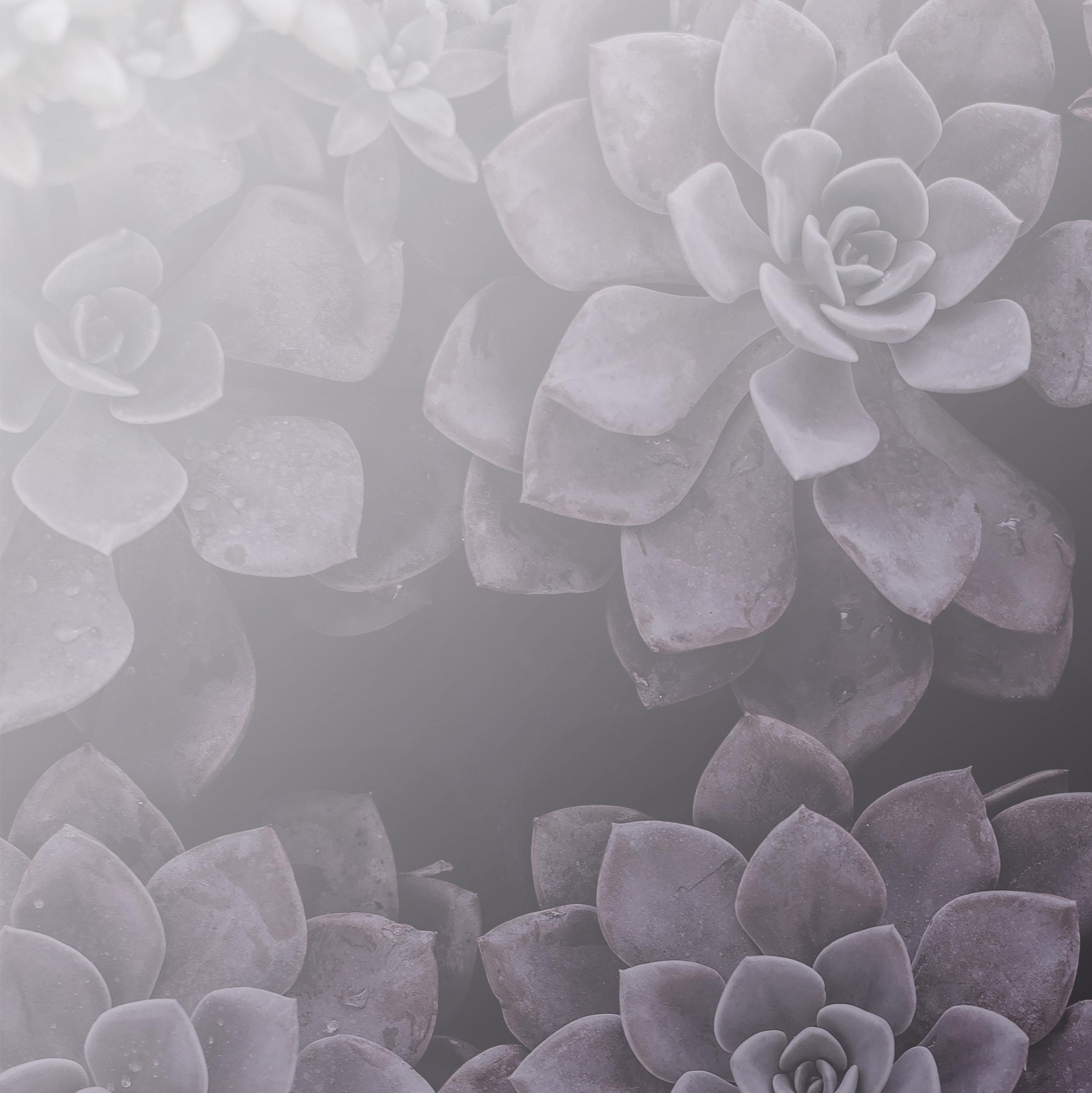 purple succulents_square.jpg