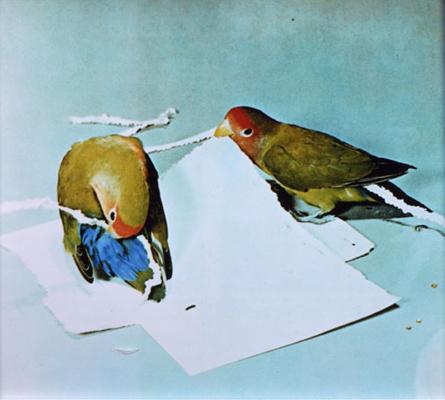 W3.lovebirds.jpg
