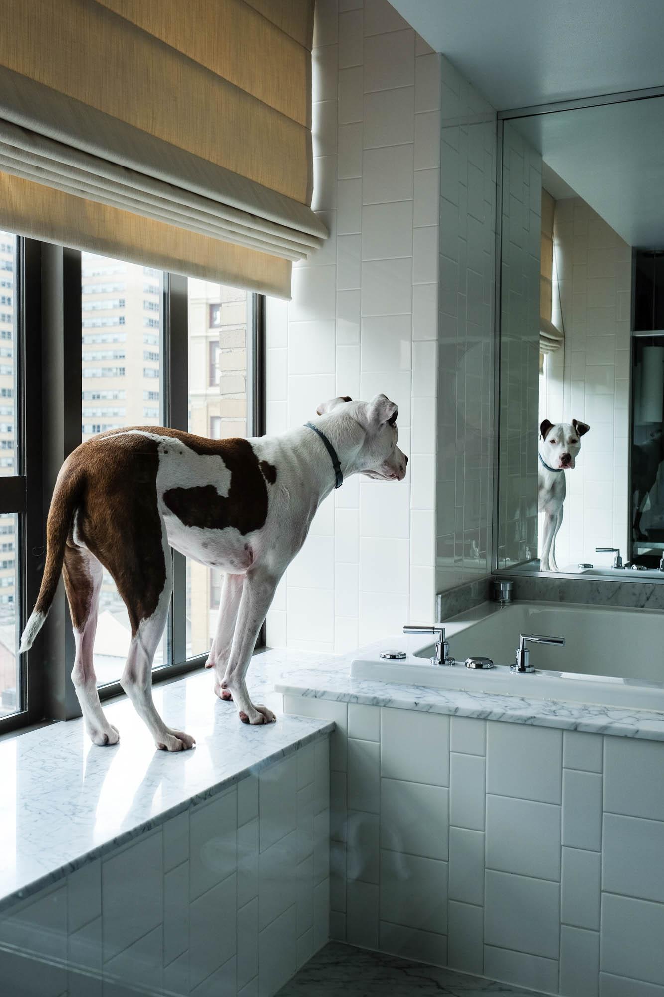 Kimpton_Palomar_Dog_Friendly_Hotel_Philadelphia_Photographer_Kristen_Humbert_3