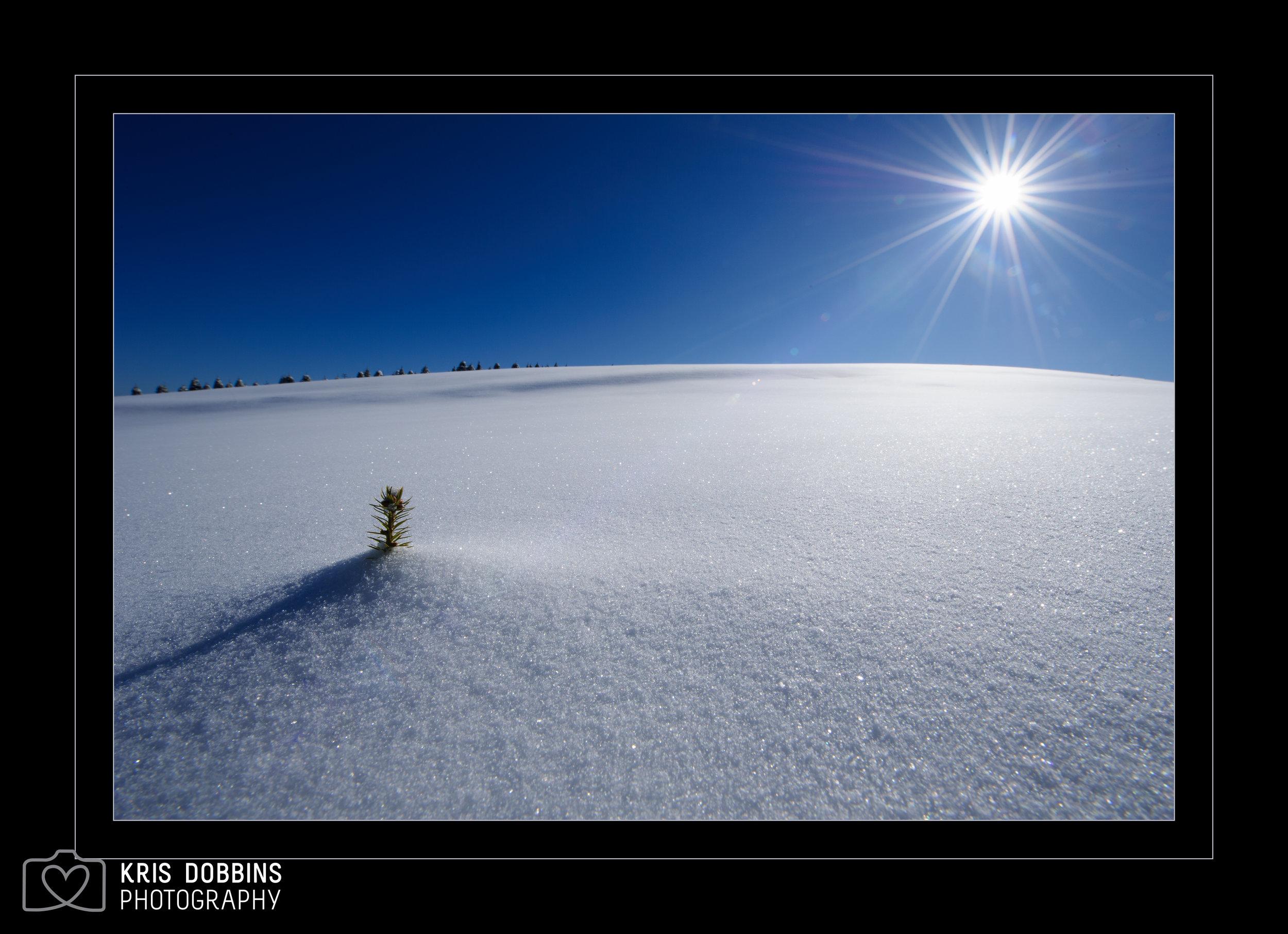 Nature's Sun Salutation