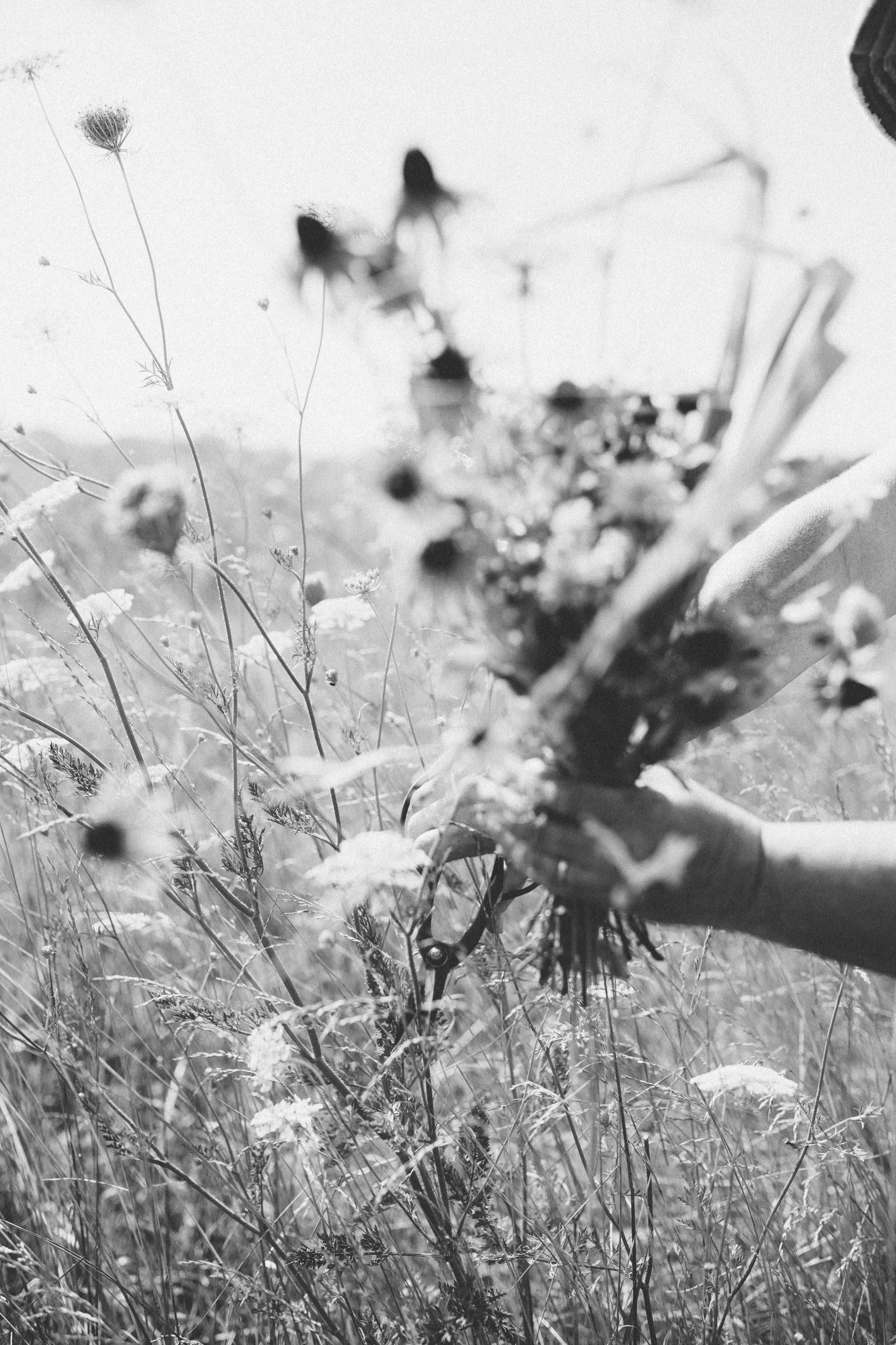 roadside-flowers-0075.jpg