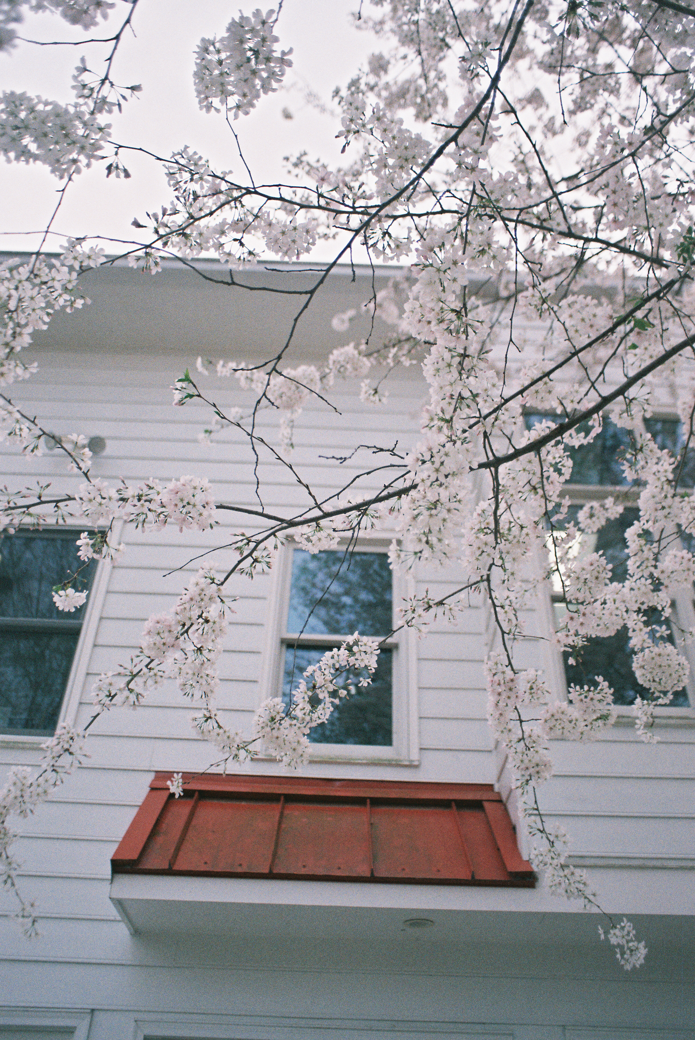 shot with ektar 100 35mm film on almost-exactly-this day last year
