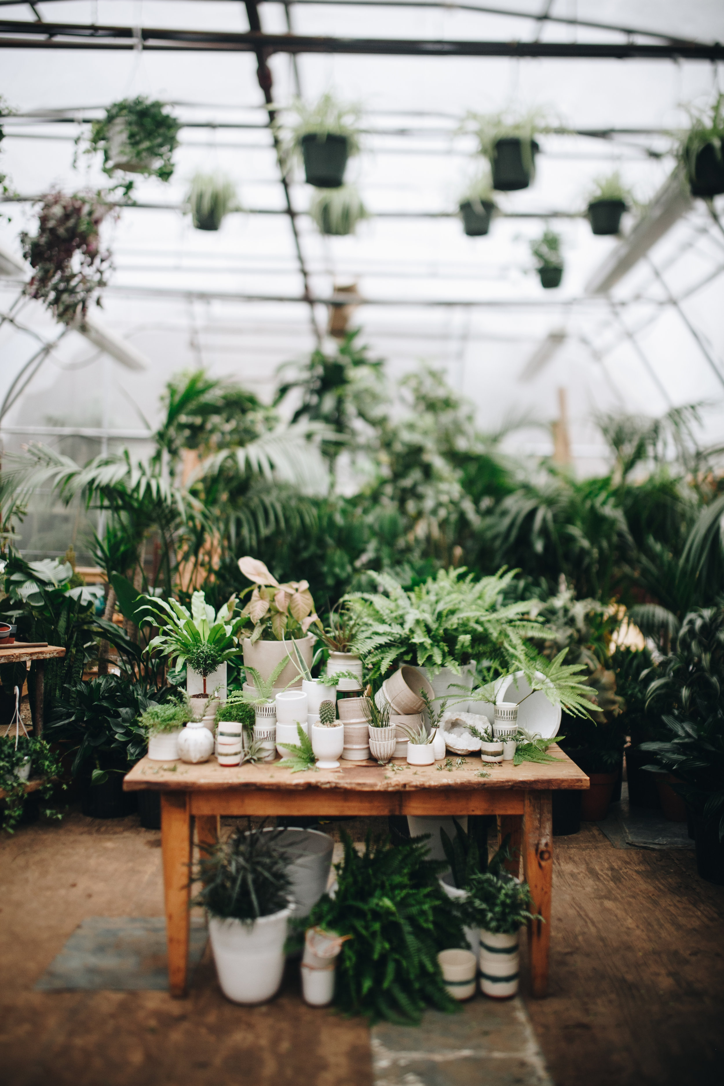plantshed-9169.jpg