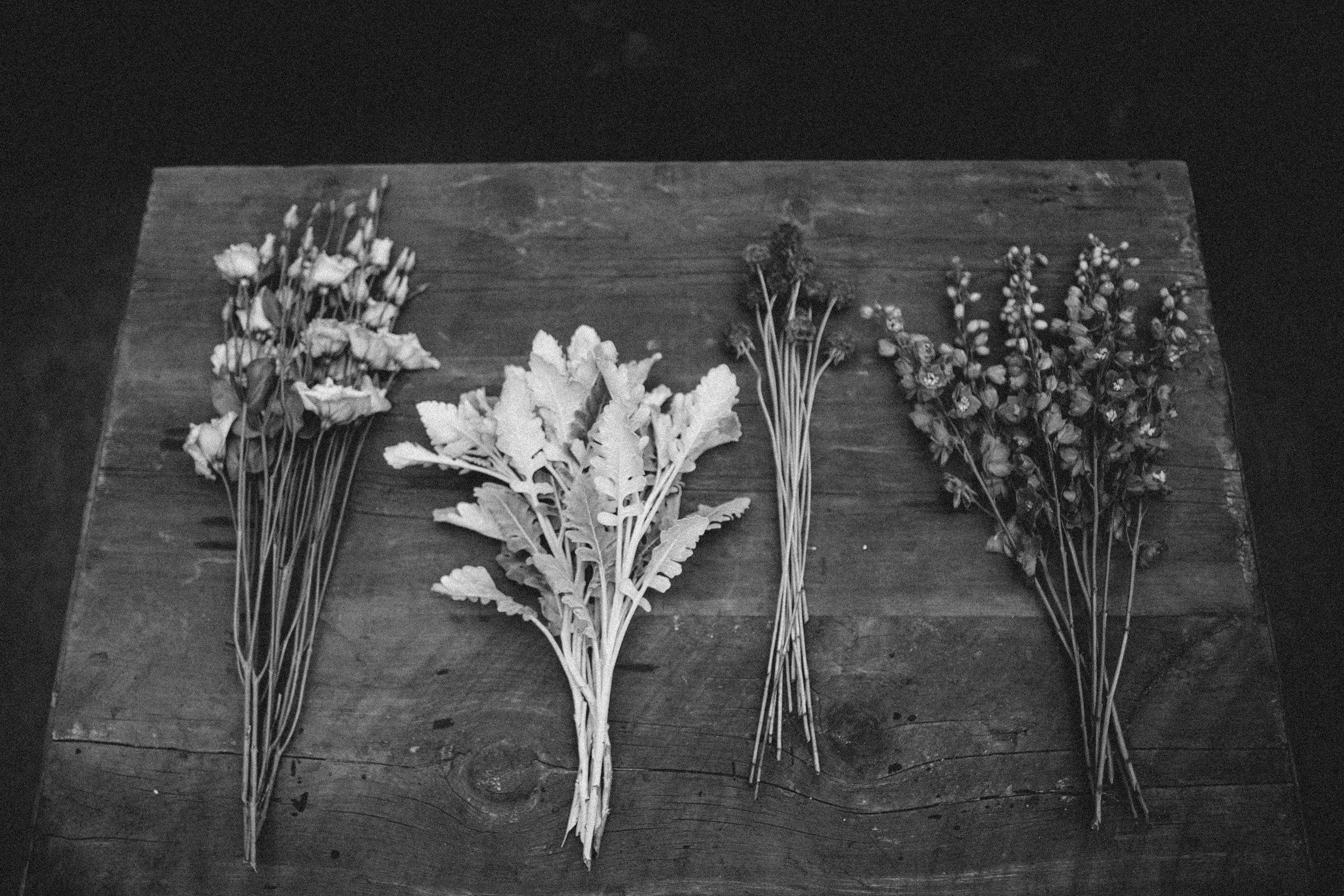 plantshed-9756.jpg