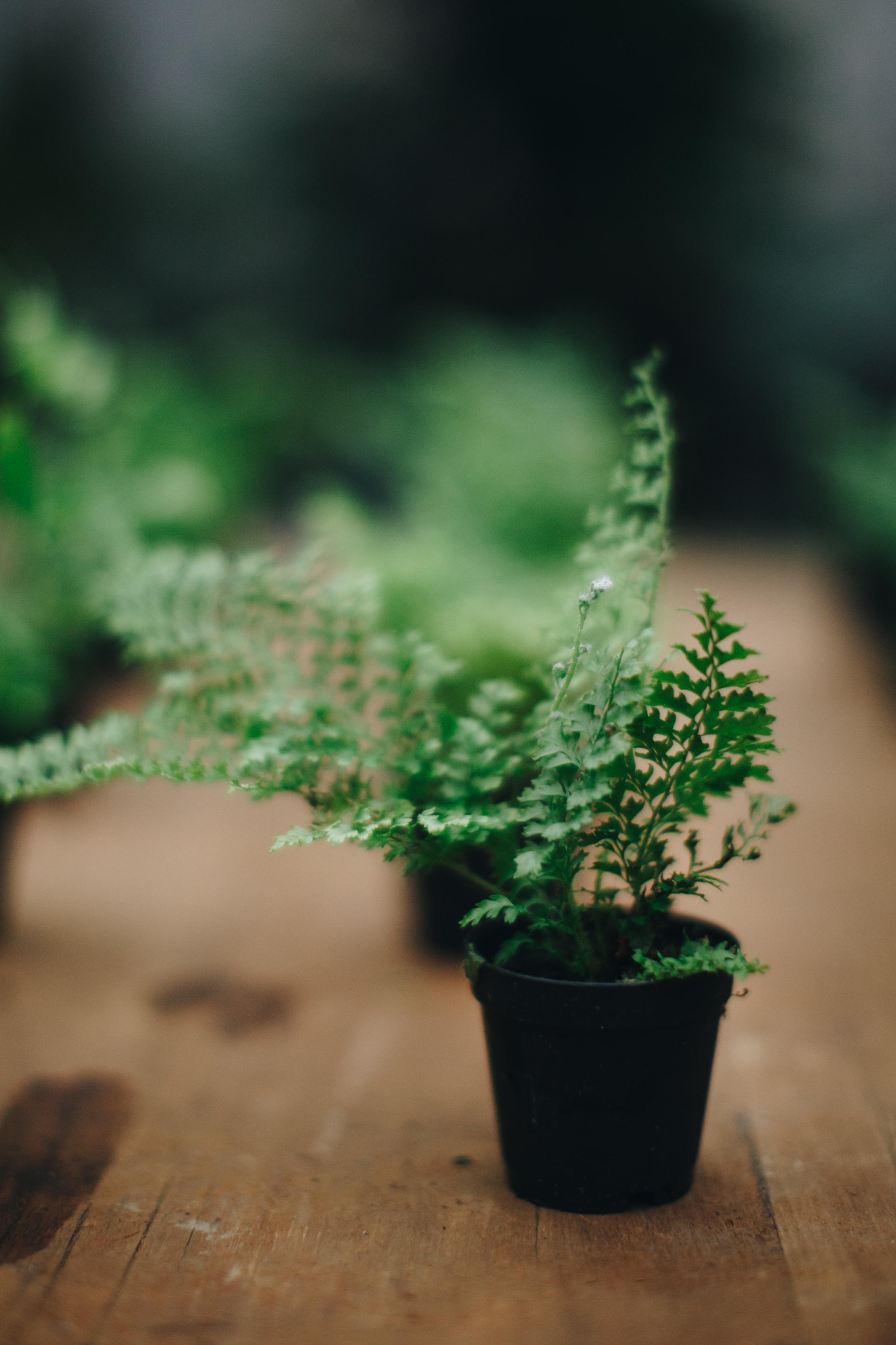 plantshed-9619.jpg