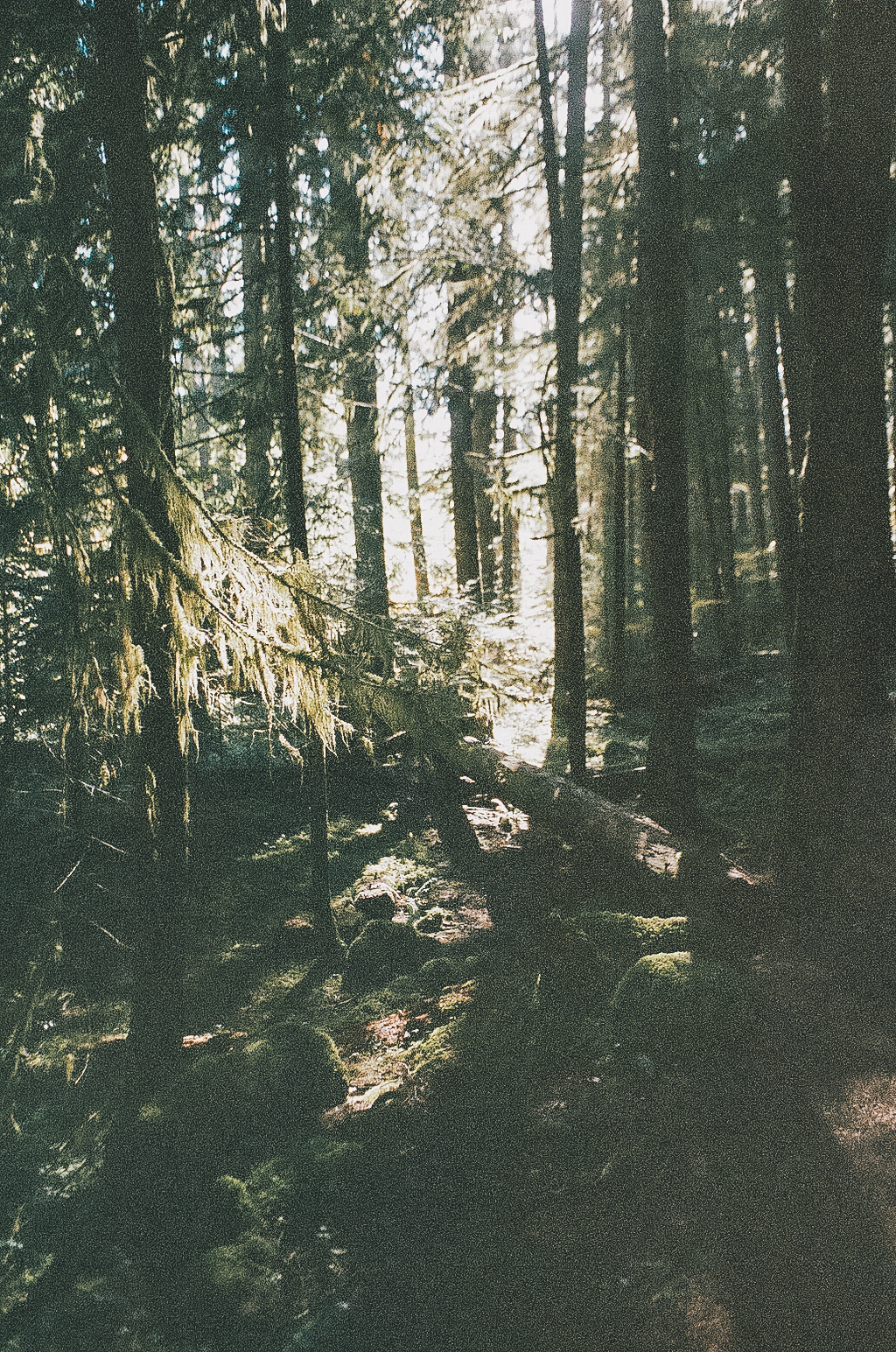 oregon-woods-73460013.jpg