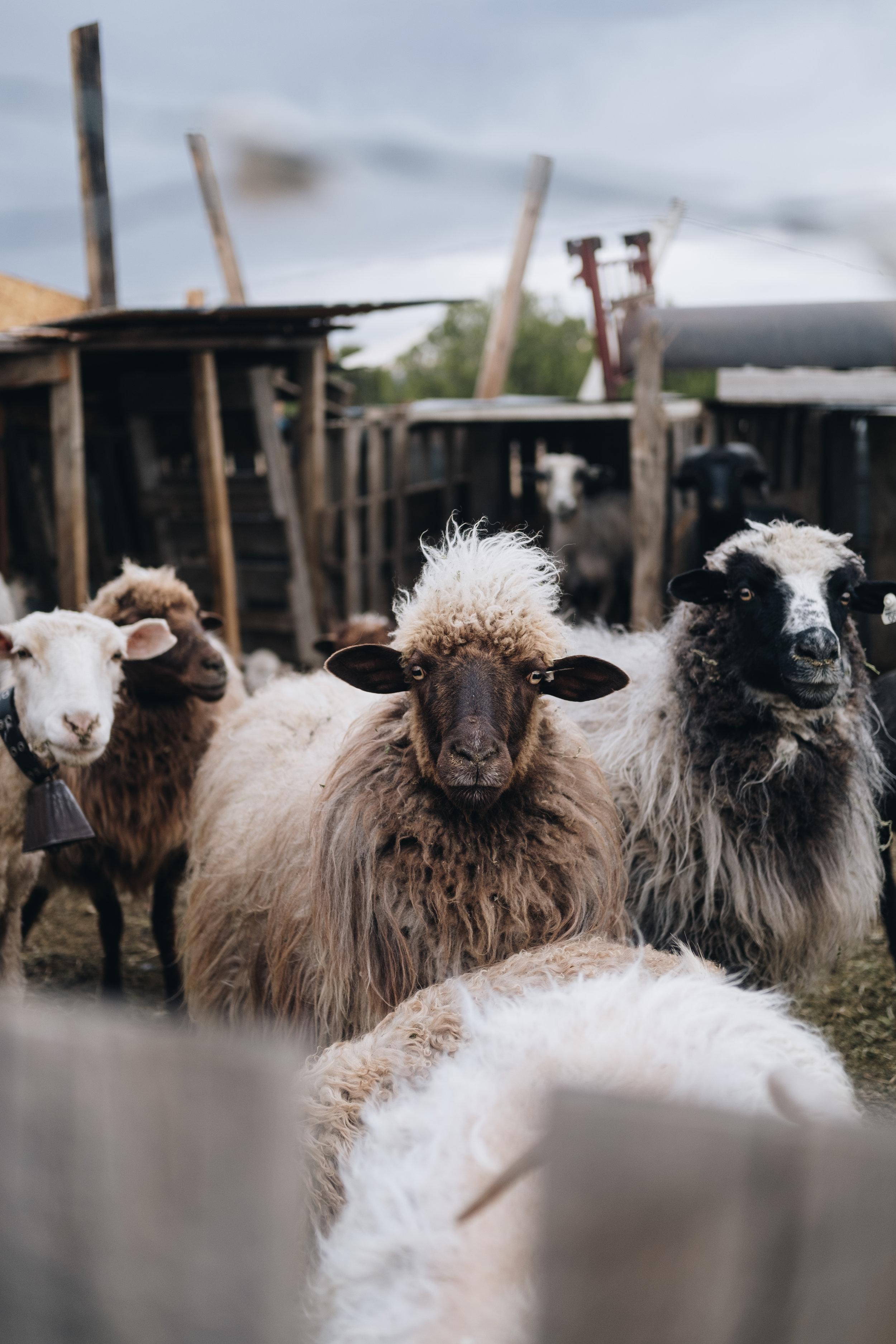 drake-mace-shepherd-4950.jpg