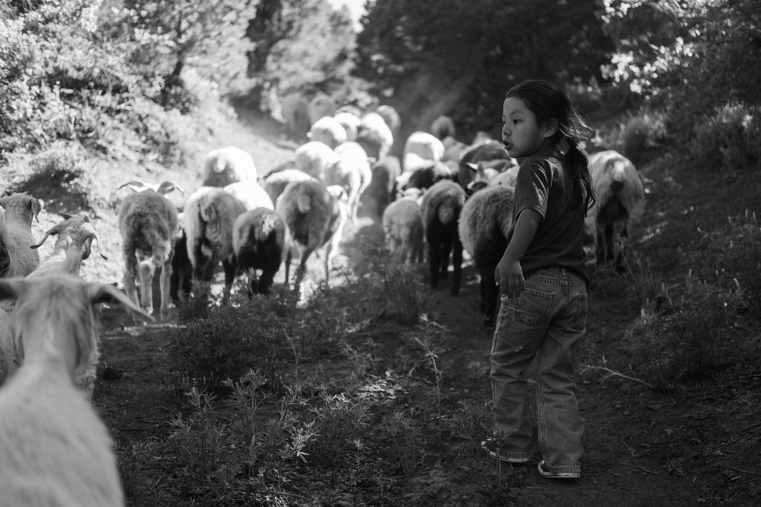 sheep-hike-6937.jpg
