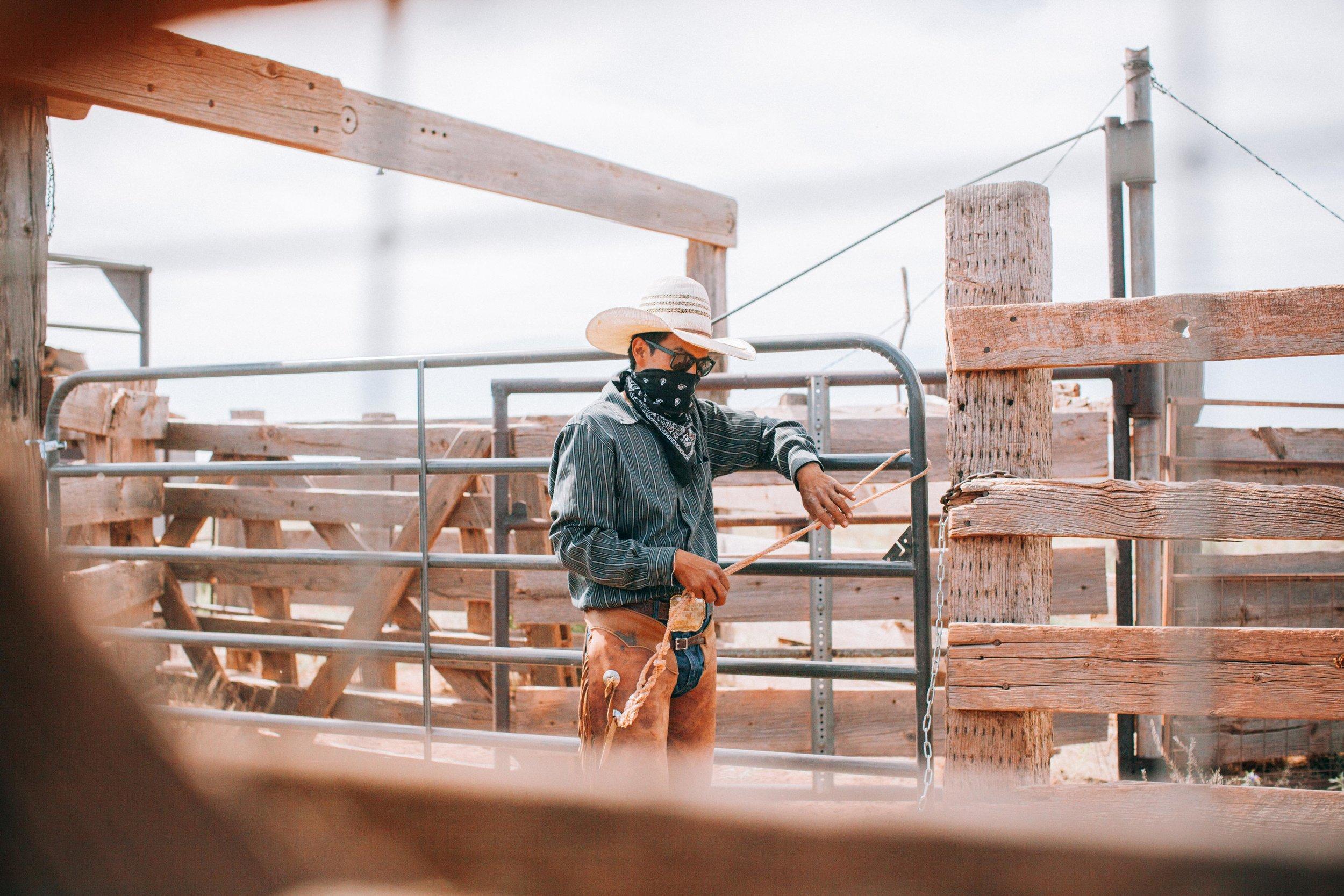 cattle-drive-8498.jpg