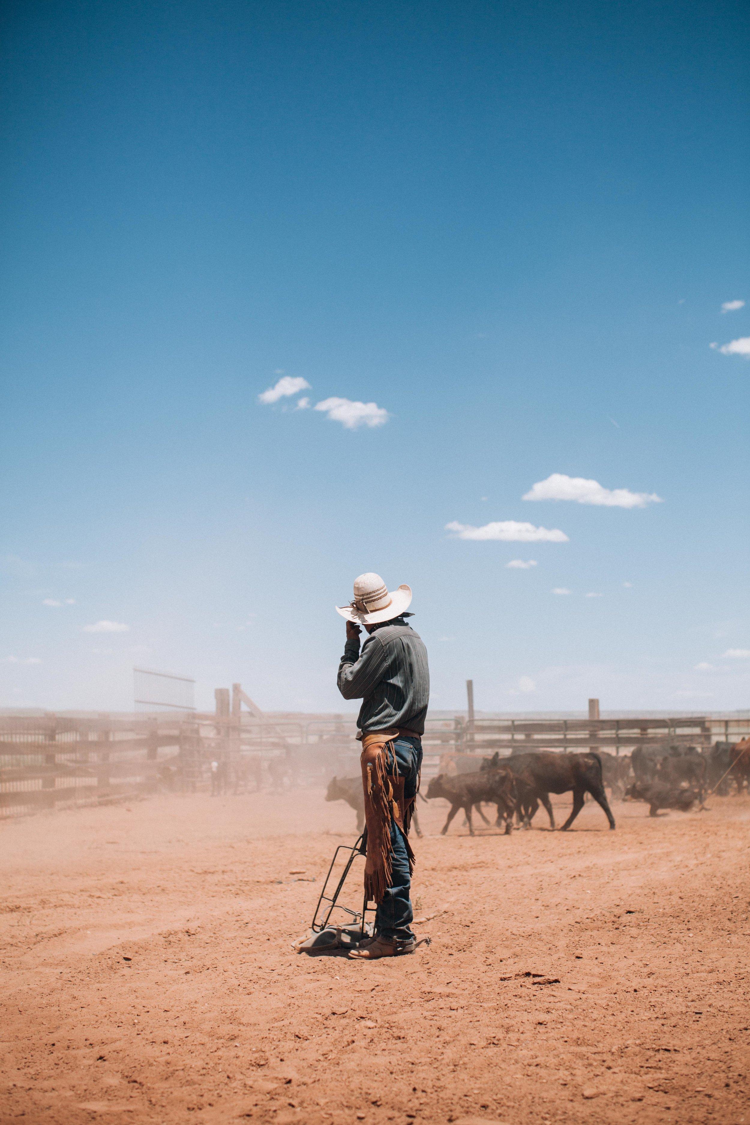 cattle-drive-8616.jpg