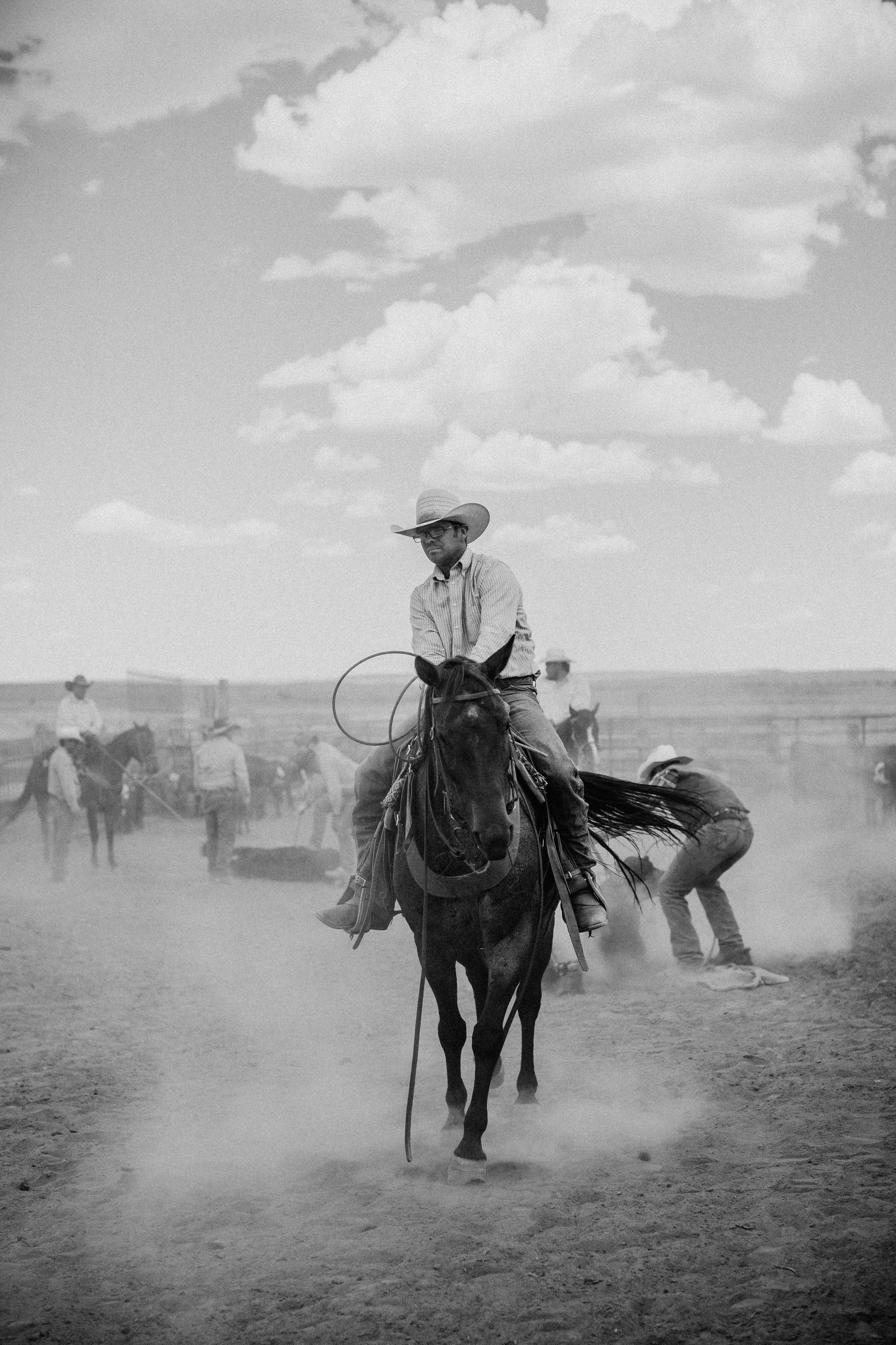 cattle-drive-8656.jpg