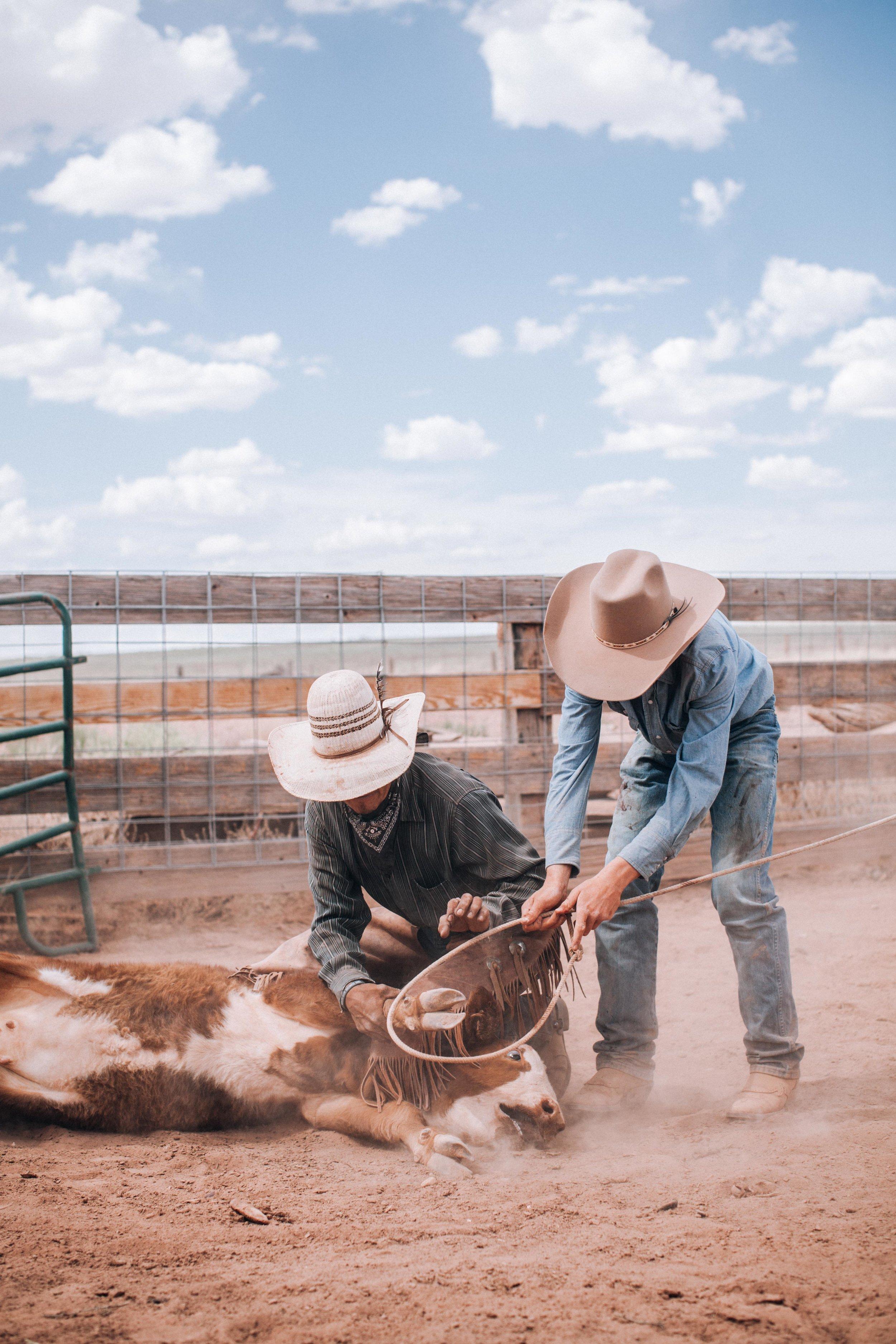 cattle-drive-8686.jpg