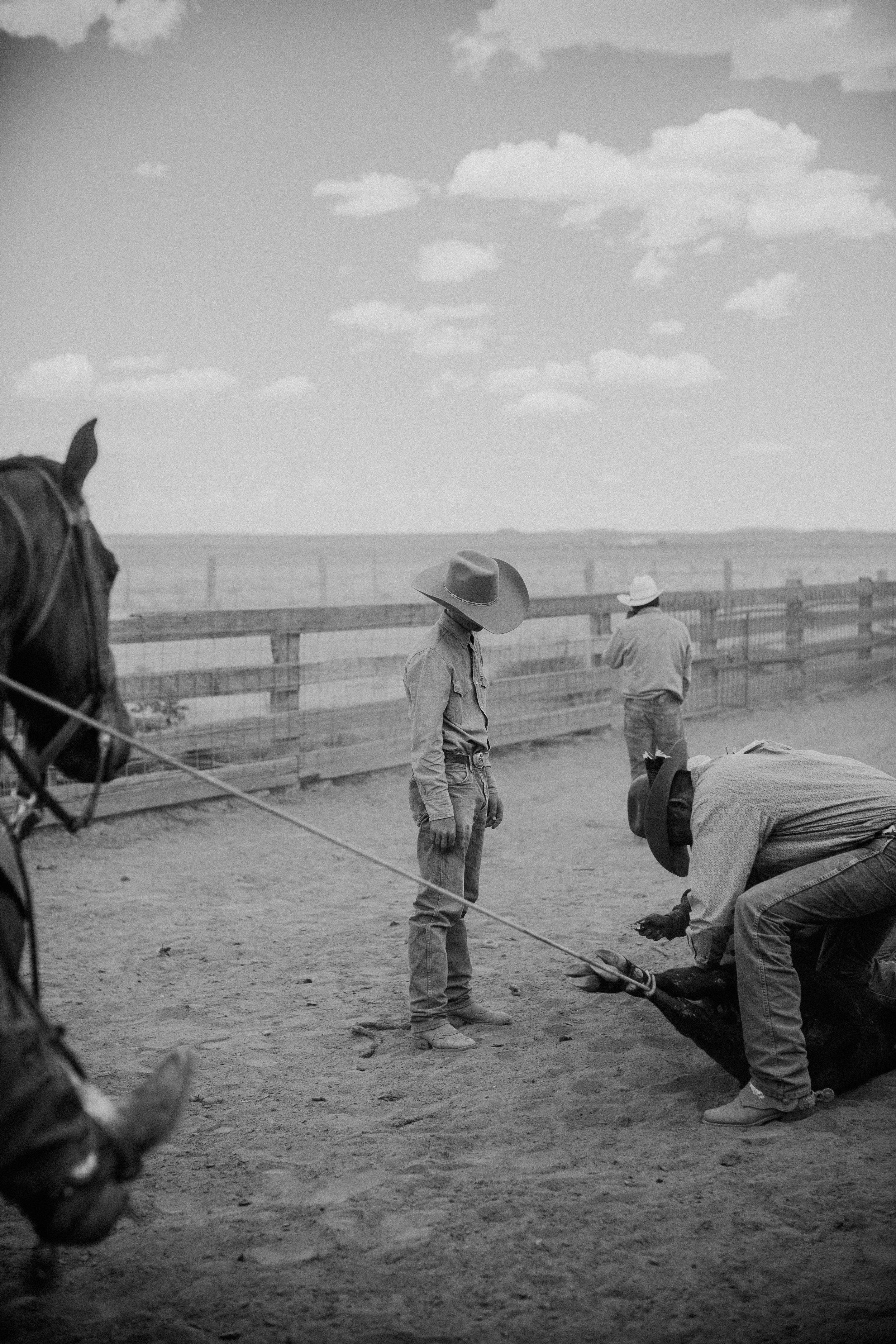 cattle-drive-8662.jpg