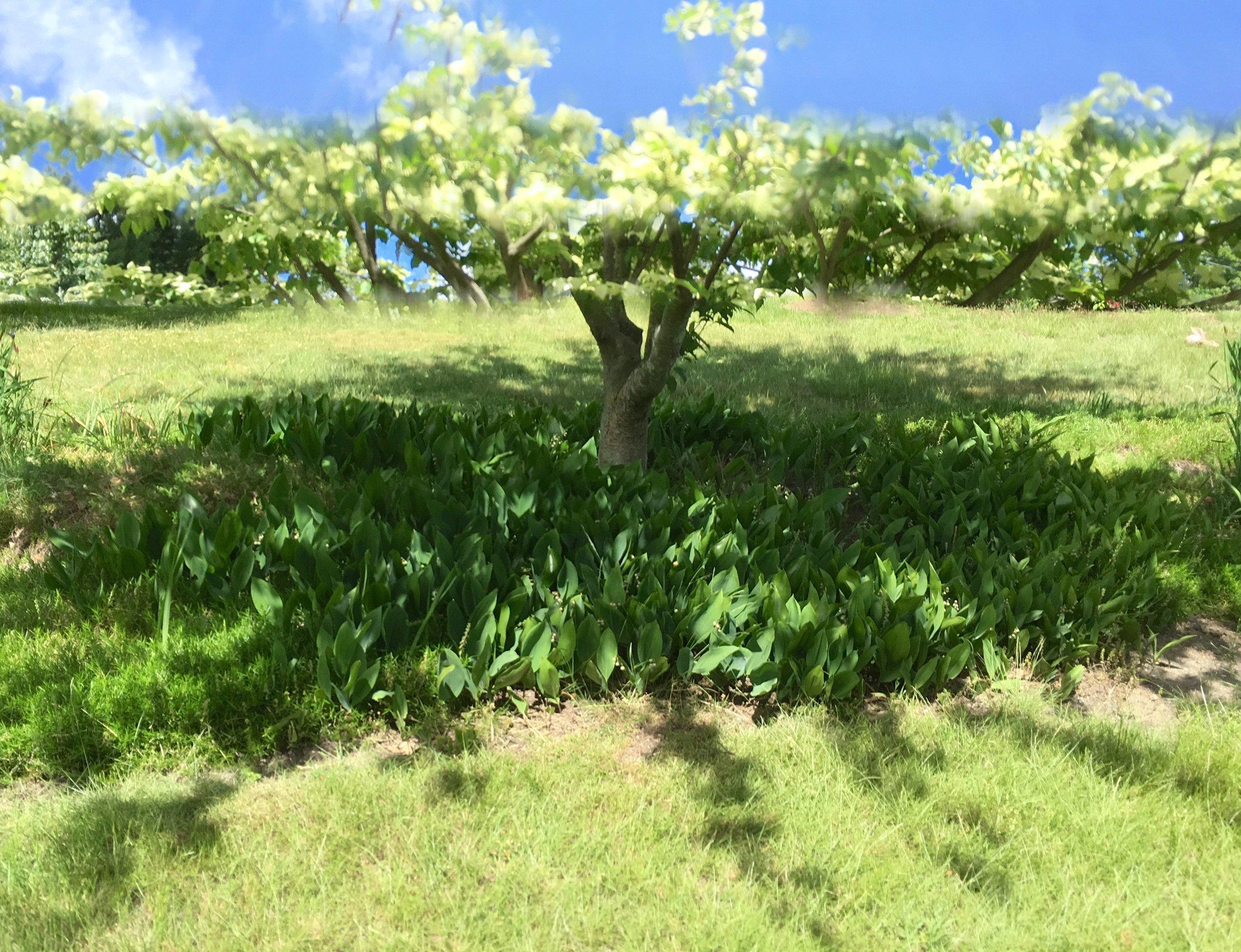 pano tree v2 #38 IMG_7510 copy.jpg