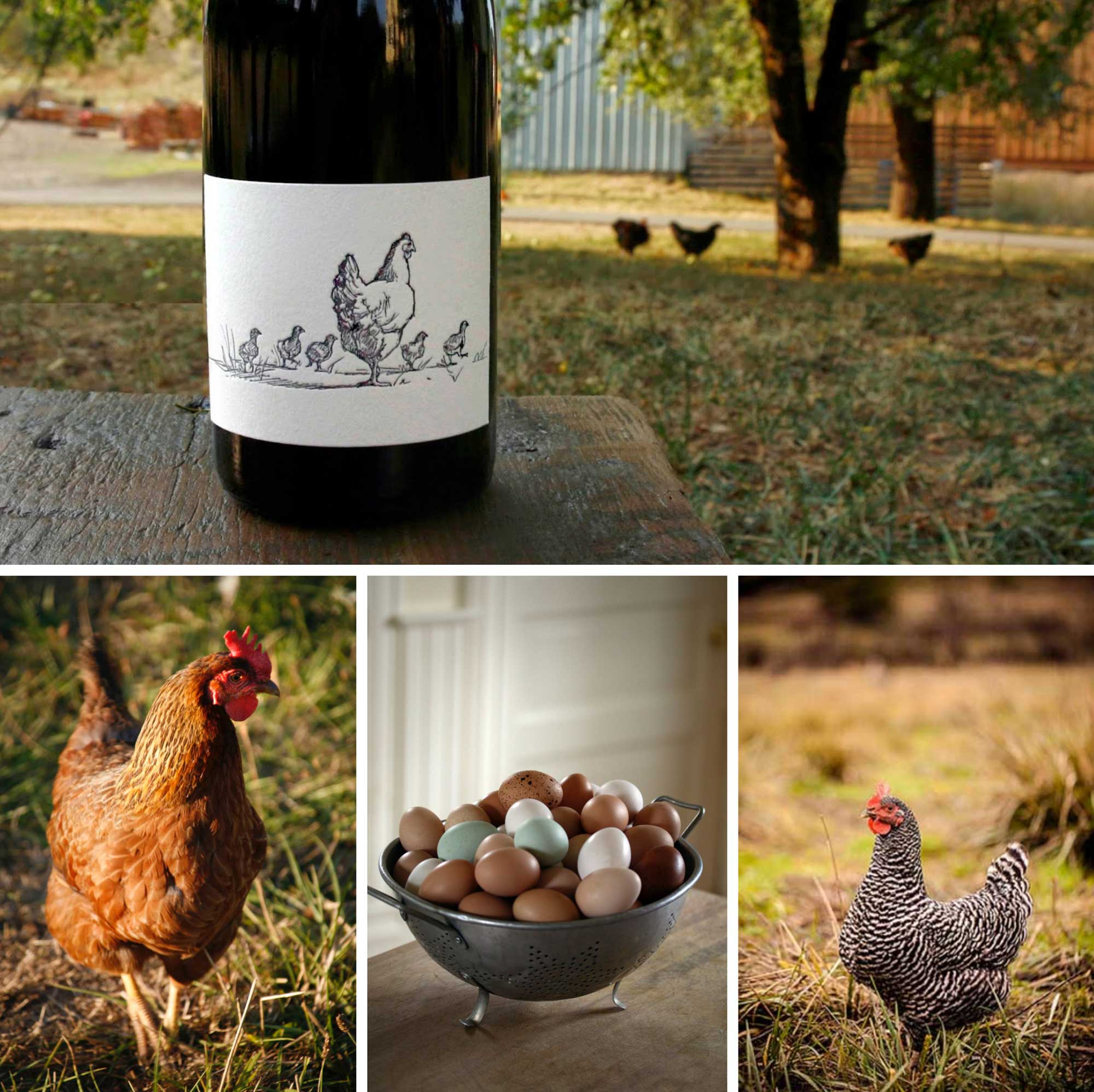 Big-Table-Farms-Hen-Collage-web.jpg