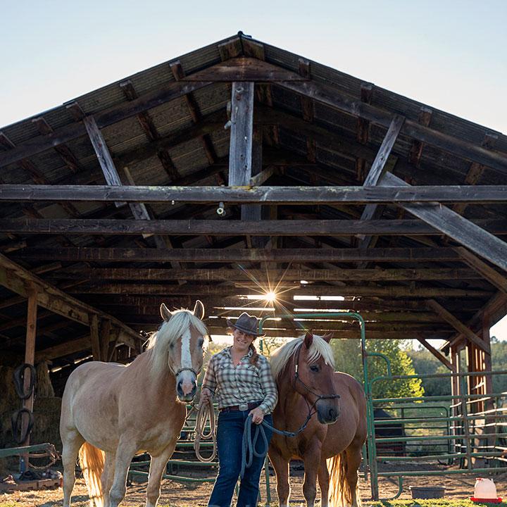 clare-horses-square-web.jpg