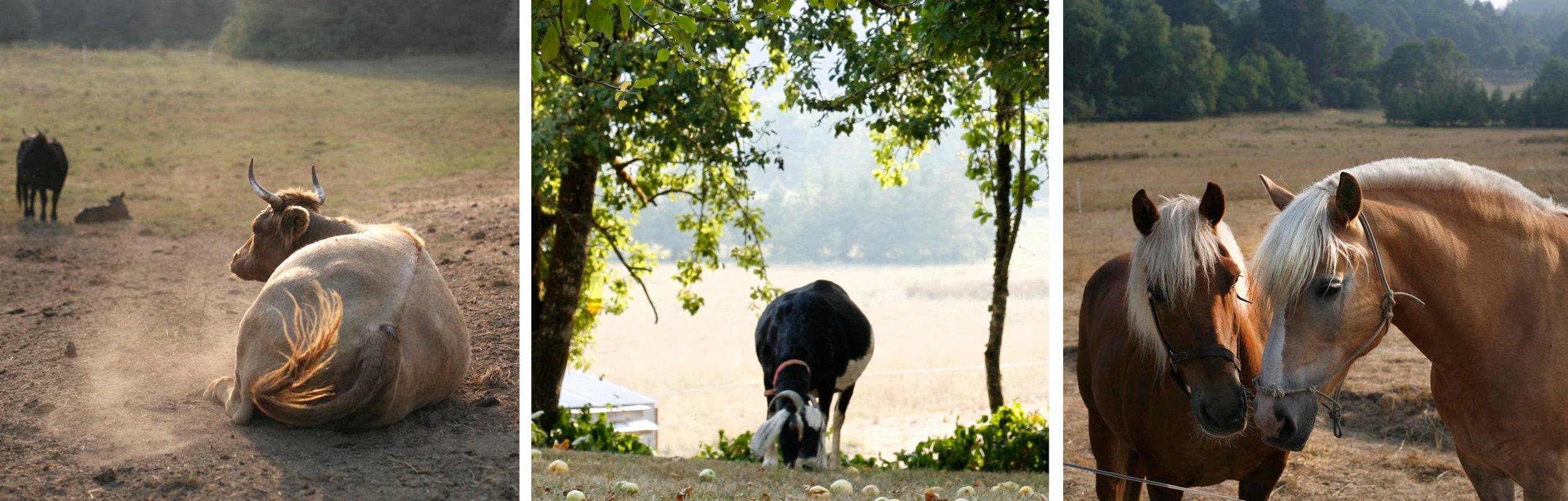 cow_goat_horses.jpg