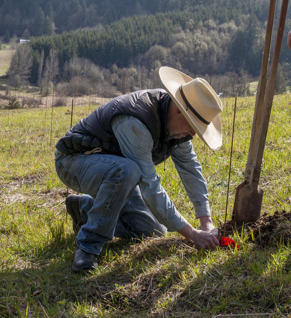 B_planting.jpg