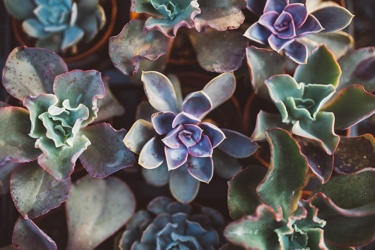 3 Ways Plants Communicate: Succulents