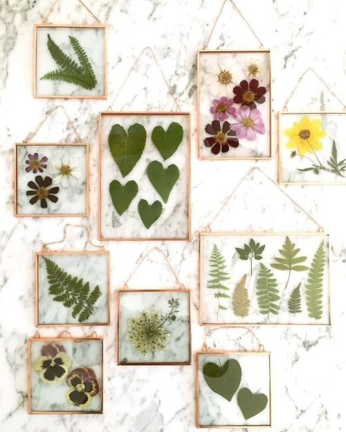 Collection of Foliage and Pressed Flowers.  Photo from sosuperawesome.com.