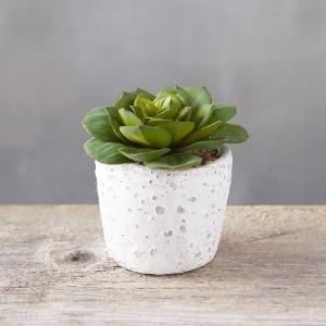 diy plant.jpg