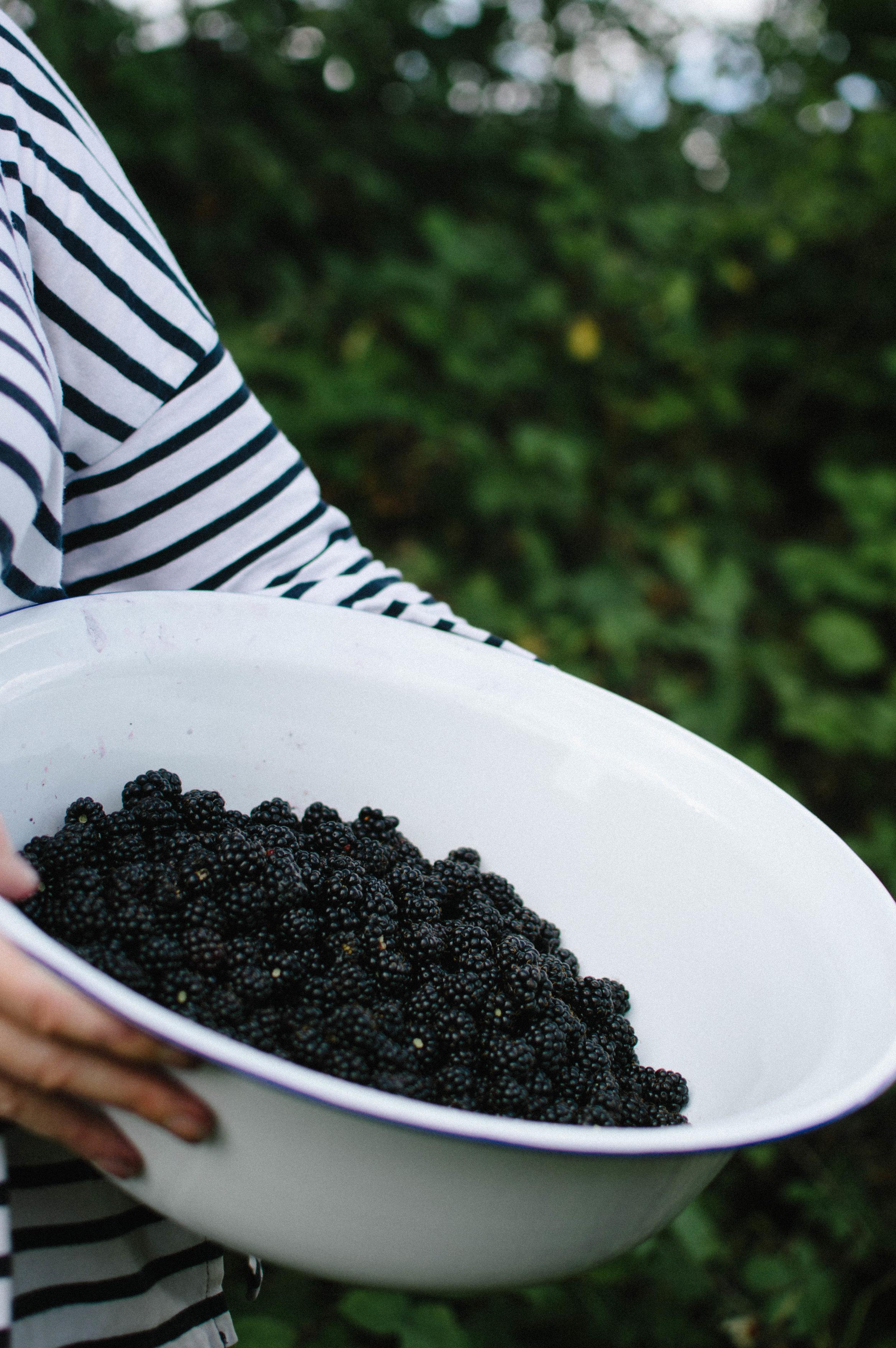 Blackberry & Bay Leaf Jam - 1.5kg blackberries, fresh or frozen1kg jam sugar1 lemon, zested4 tsp lemon juicePinch of salt2 dried bay leaves