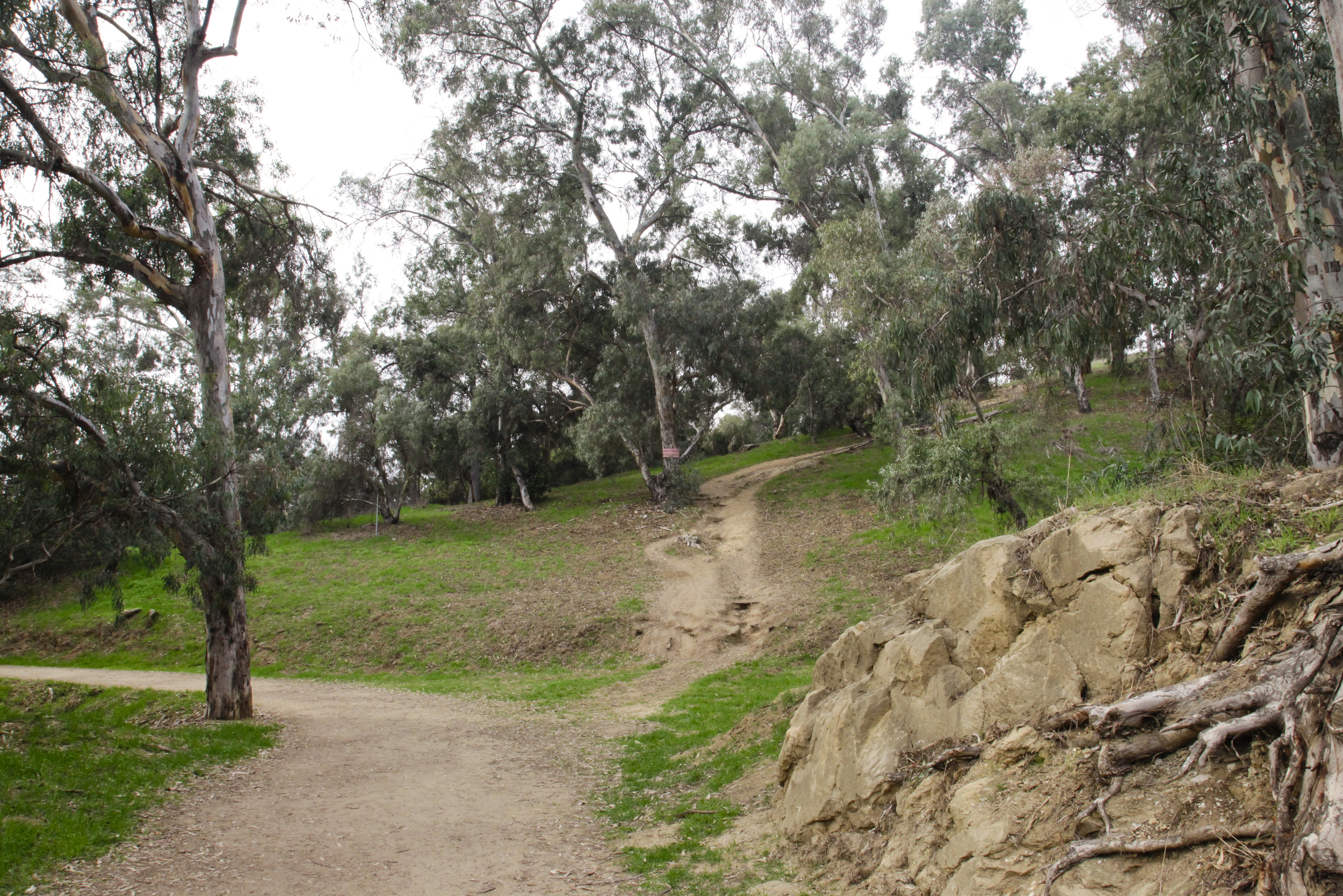 Eucalyptus Carvers: A public art intervention in Elysian Park, 1
