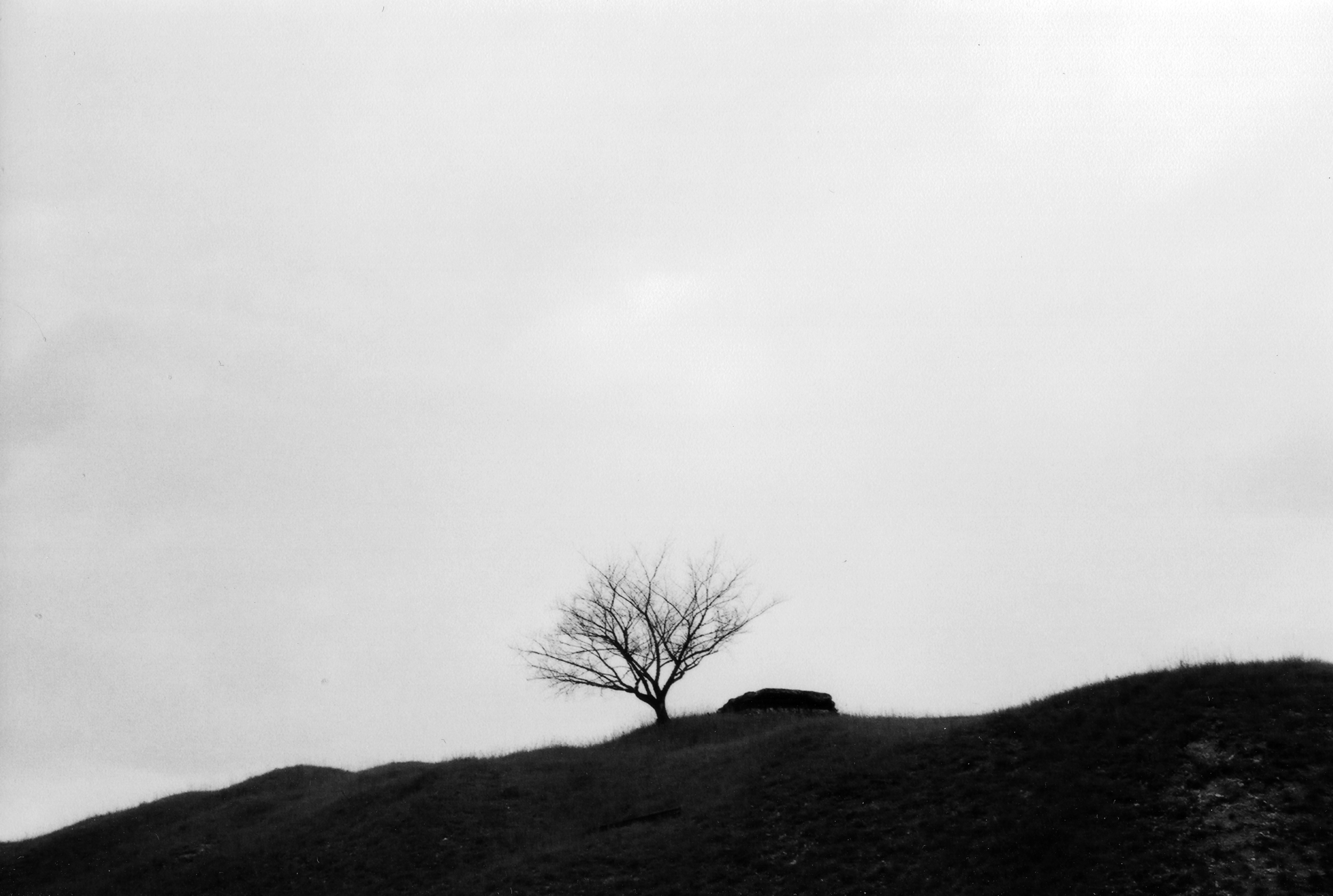A tree atop Fort du Vaux, outside of Verdun, France.