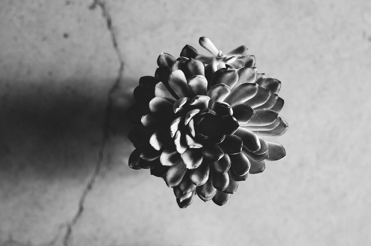 TimelapseStills_ED_Alex_Wallace_Photography_6761.jpg