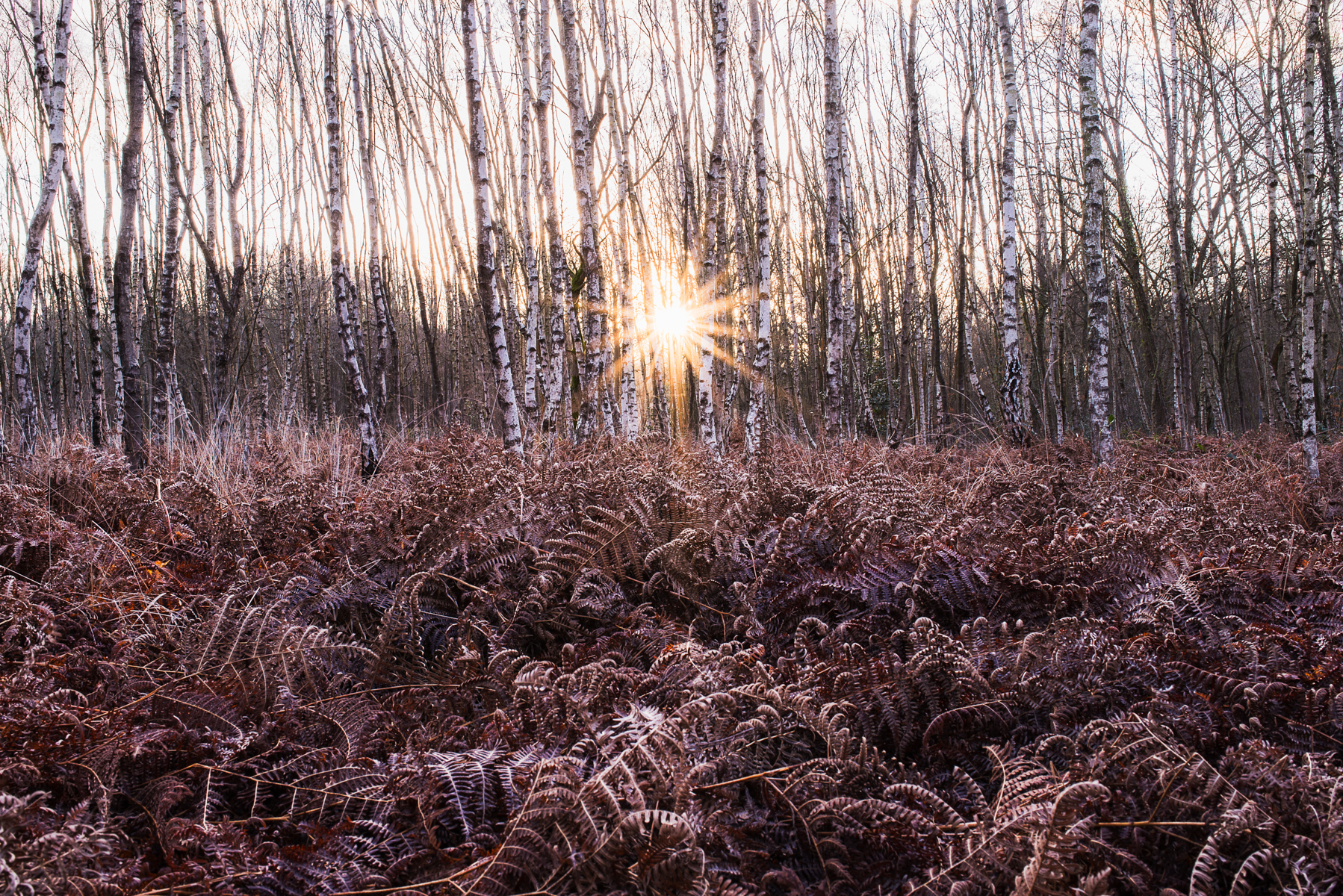 Surrey_Sunrise_Alex_Wallace_Landscape_Photography