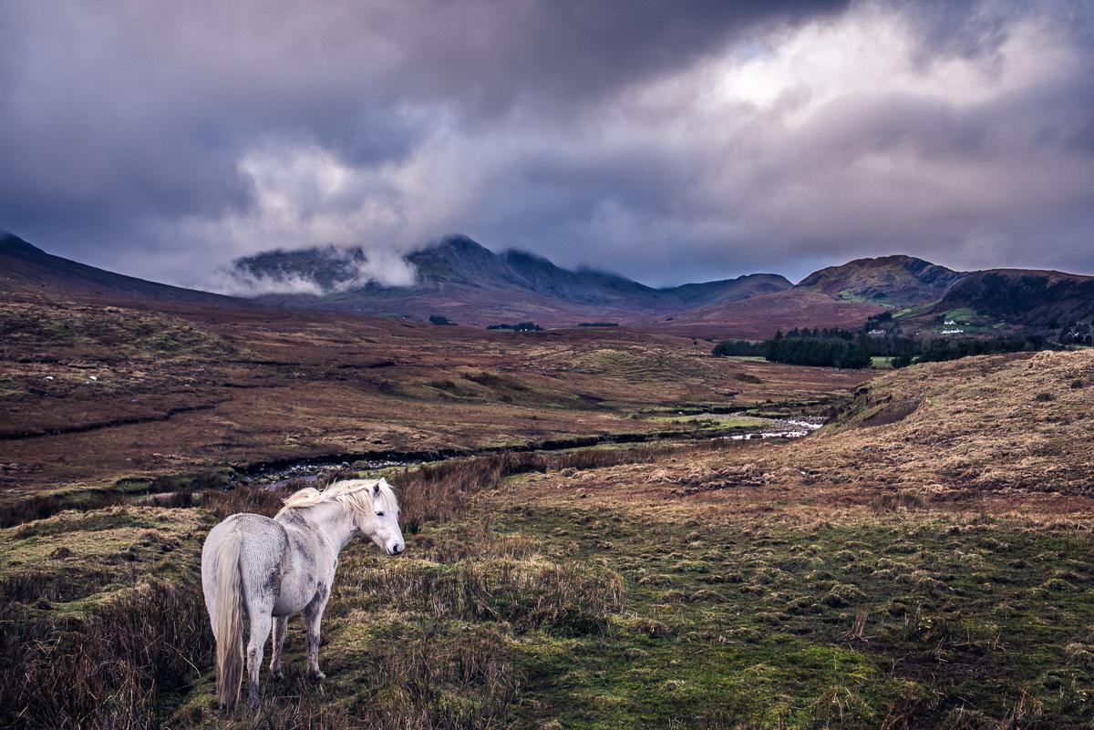 Ireland_Alex_Wallace_Photography_006.jpg