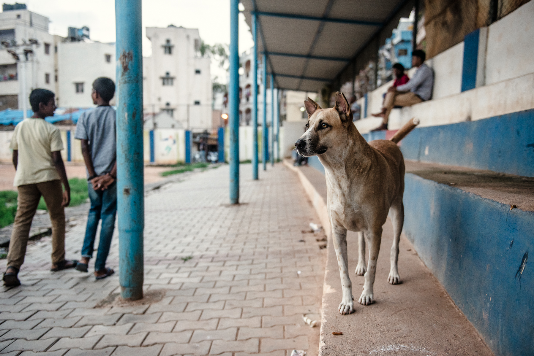 PL_India_Day1_Alex_Wallace_Photography_668.jpg