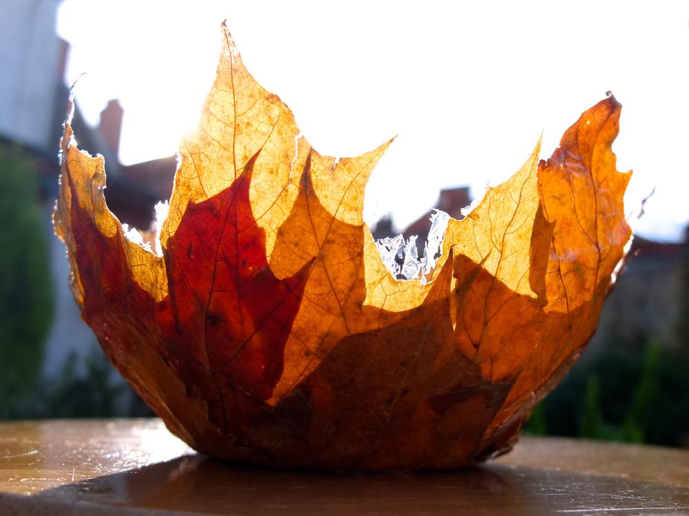 Make a Leaf Bowl from Wonder Kids